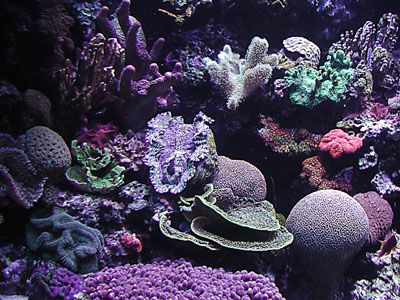 Coral reefs can be saved by reducing, reusing, recycling … and rethinking!