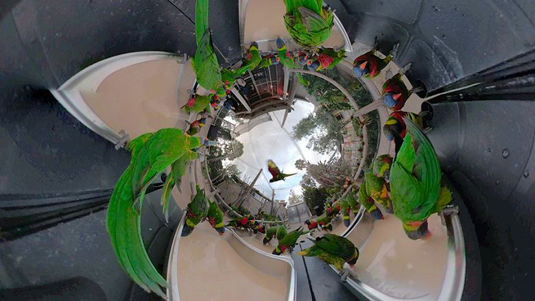 Breakfast Lorikeet Forest-Tiny Planet - popup