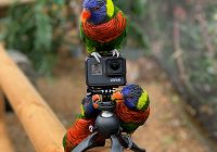 Lorikeet Recall Training
