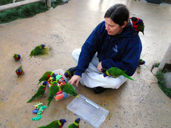 LORIKEET HAPPY HOUR
