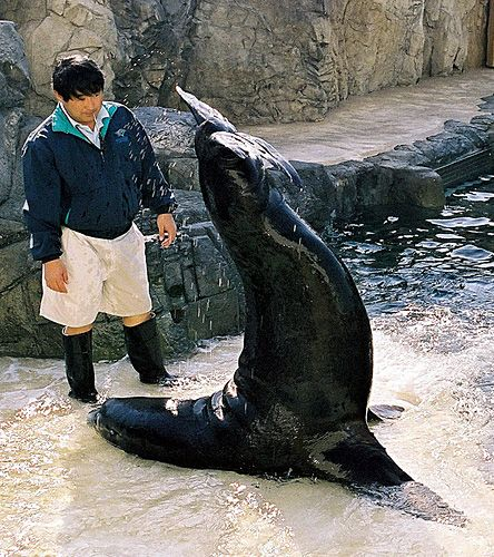 THE BIG GUY—MILLER THE SEA LION