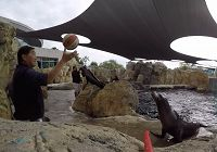 Fun With Milo The Sea Lion