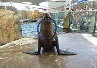 Come Along on a Sea Lion's Wild Ride