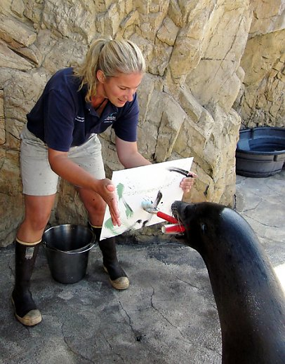 Milo the sea lion brushes a canvas held by senior mammalogist Carolyn