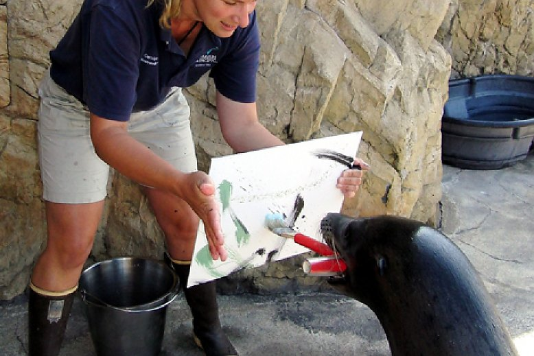 Milo the sea lion brushes a canvas held by senior mammalogist Carolyn - slideshow