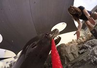 A Sea Lion's Video Tour of his Remodeled Exhibit