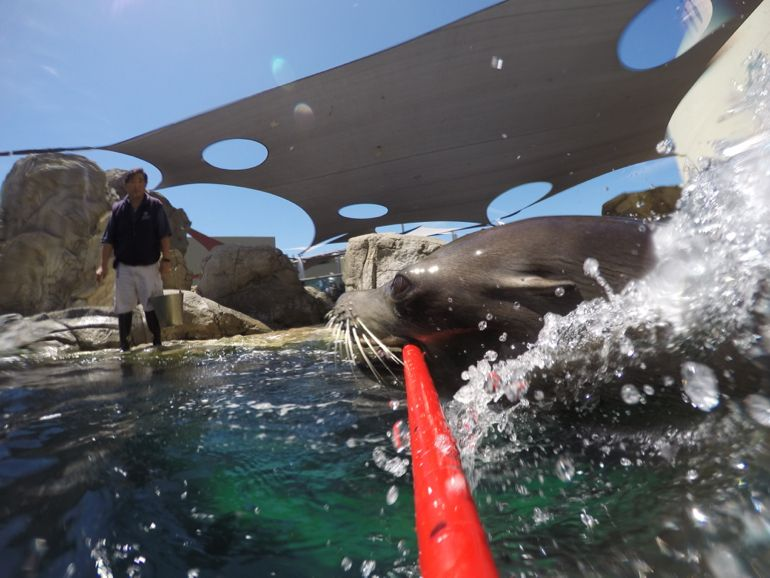 Milo's Year Of The Sea Lion Selfie Stick