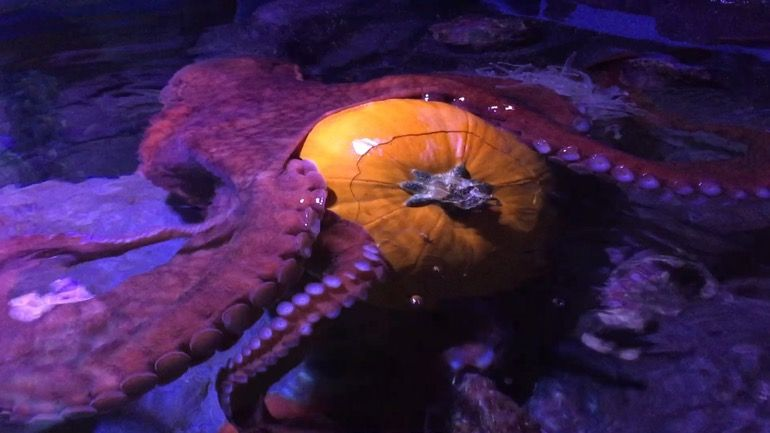 The Octopus and the Zombie Sea Stars