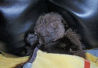 2010 Look Back: The Sounds of an Orphan Baby Otter Named Ollie