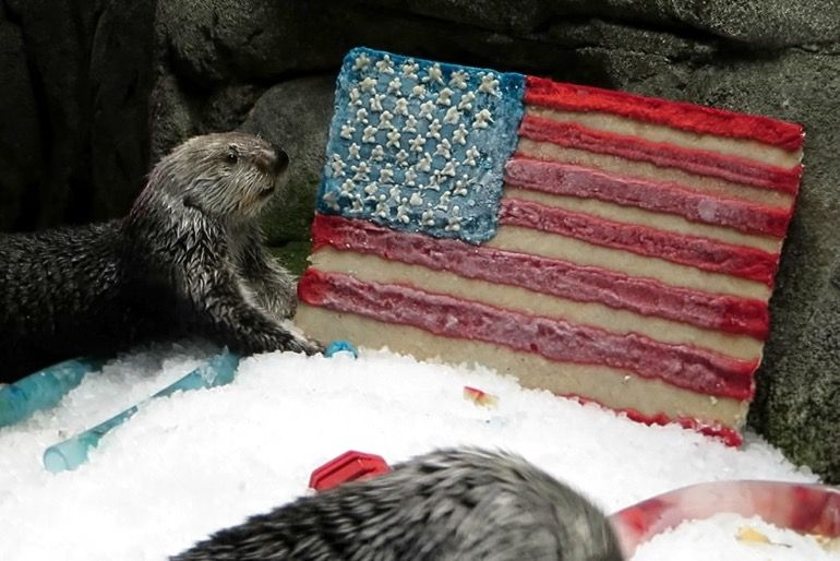 Ollie the sea otter next to the US flag made of frozen seafood - lightbox