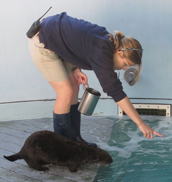 Ollie the Otter's Schooling Continues
