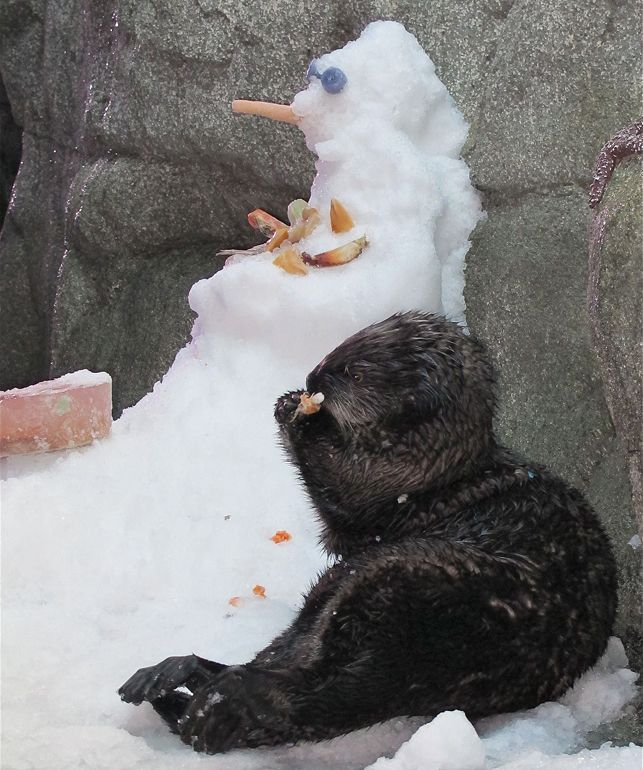 Ollie the Otter's First Snowman