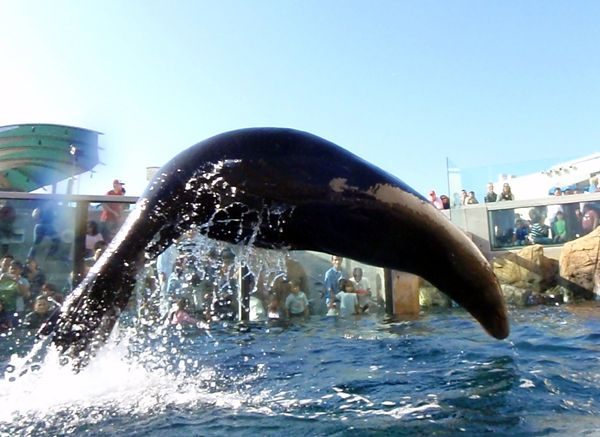 Parker The Sea Lion Gets Airborne