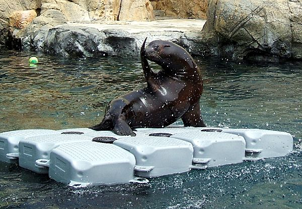 Enjoying the Fun Antics of Parker the Sea Lion