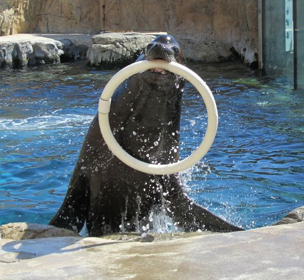 SEA OTTER AND SEA LION RETRIEVAL BEHAVIORS
