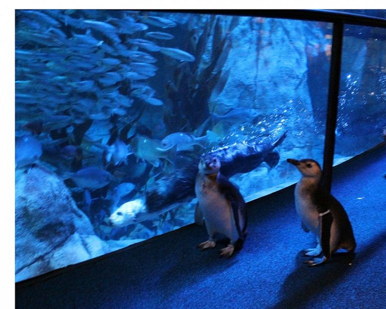 March of the Penguin Chicks