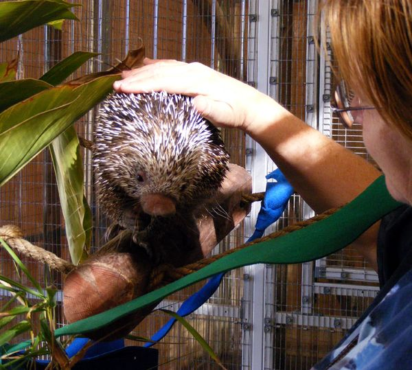 How To Pet A Porcupine