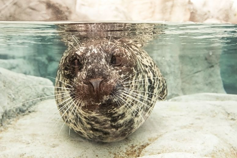 Habitat Renovation is Seal and Sea Lion Approved