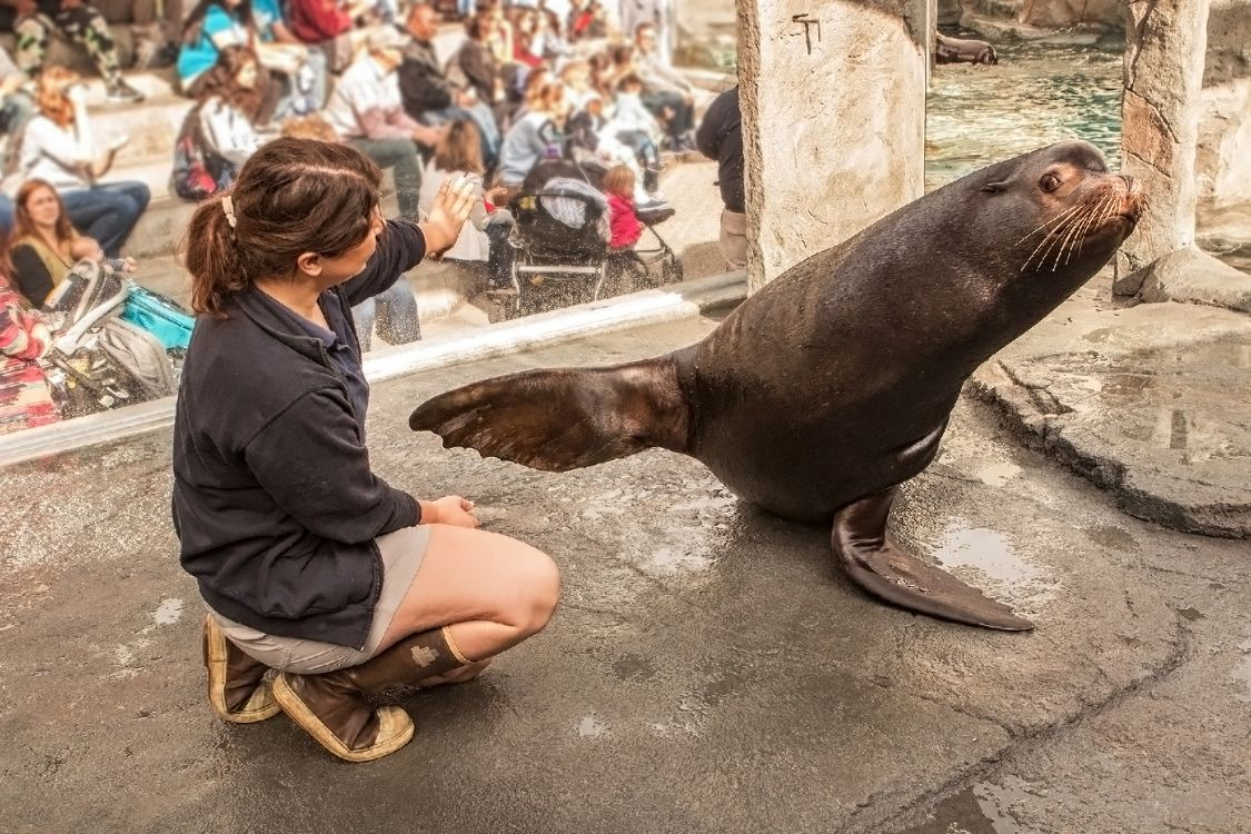 Trainer and sea lion - lightbox