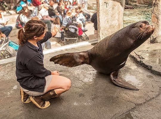 Trainer and sea lion - slideshow