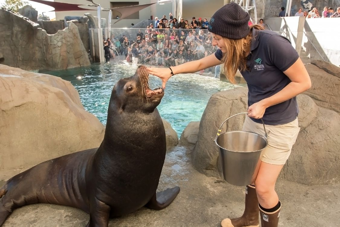 Trainer with hand on sea lion's mouth - lightbox