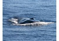 Finally, Confirmation of a Mystery Whale from 2011!