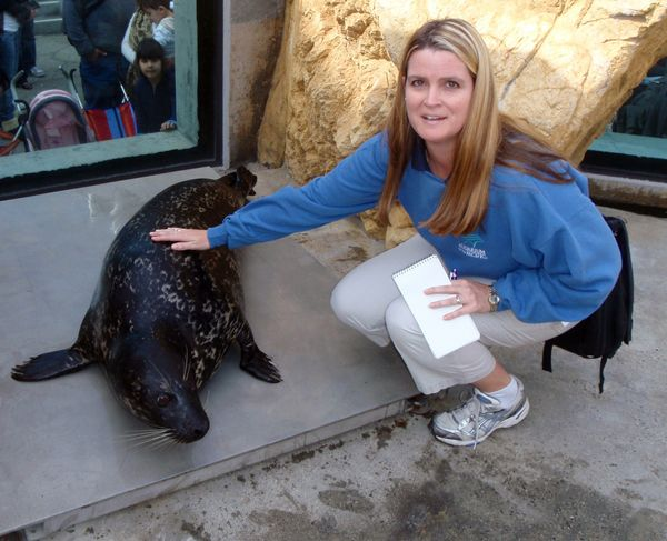 Get Ready to Meet Shelby the Harbor Seal