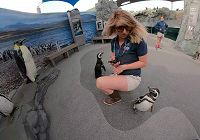 Aquarium Staff as Penguin Enrichment