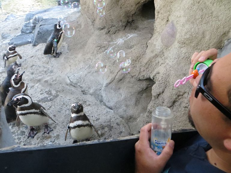 Bubbling with Penguin Enrichment Ideas