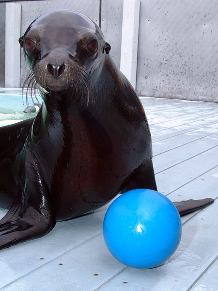 MY, HOW PARKER THE SEA LION HAS GROWN!