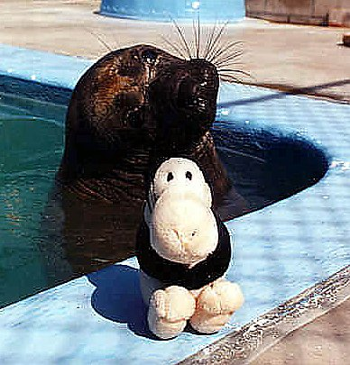 Gimpy the seal with stuffed toy