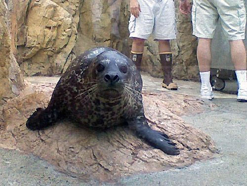 Meet the Newest Addition to Our Seal & Sea Lion Habitat!