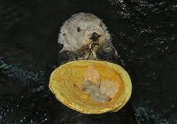 A Feast Fit for a King or Otter