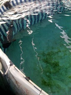 Caring For A Tiger Shark