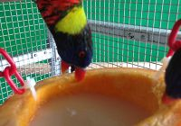 Food Treats for Lorikeets!
