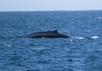 The First Blue Whales are Right on Time!