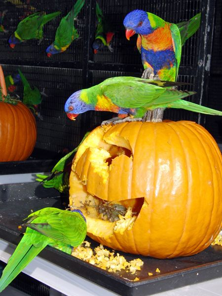 Halloween Day at the Aquarium of the Pacific