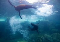 Harpo & Milo Have Arrived in the Seal & Sea Lion Habitat!