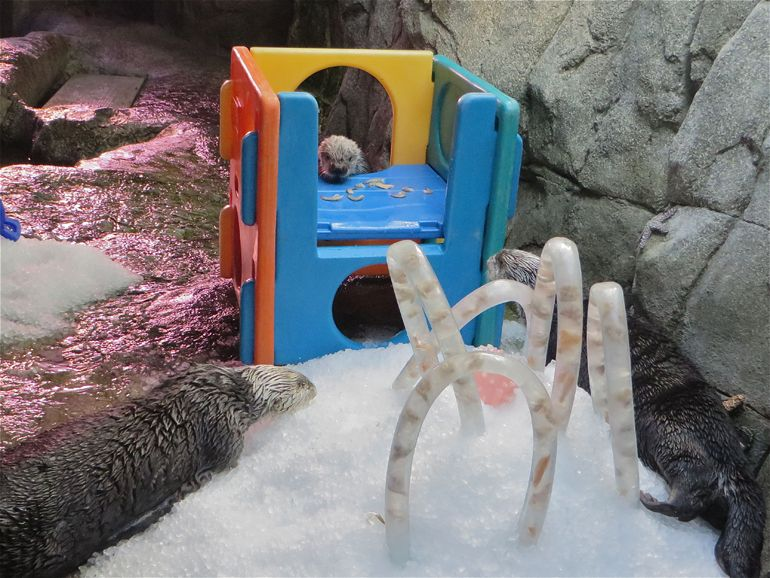 Otter Party Time-lapse