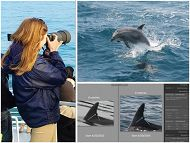 Woman taking photograph, dolphin coming out of water, and analysis of an image links to Dolphin Photo ID