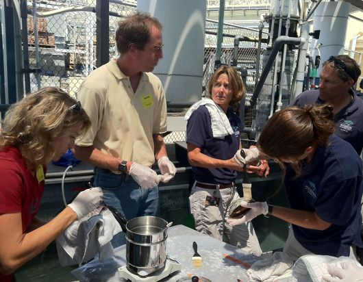 Aquarium staff working on abalone - popup