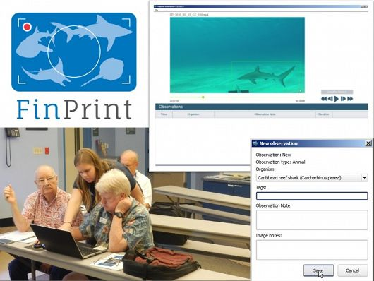 Global FinPrint graphic