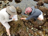 Top view of two people looking into a tide pool links to Naturalist Programs