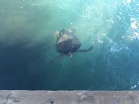 Sea turtle in the water - thumbnail