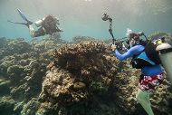 Scuba diver photographing coral