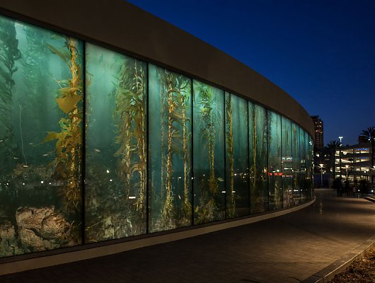 Exterior shot of the Aquarium's gift store's kelp glass wall
