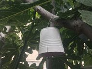 Upside down bucket hanging in tree links to Past Citizen Science Programs