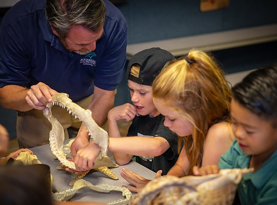 Instructor showing boy and girl shark jaw - slideshow