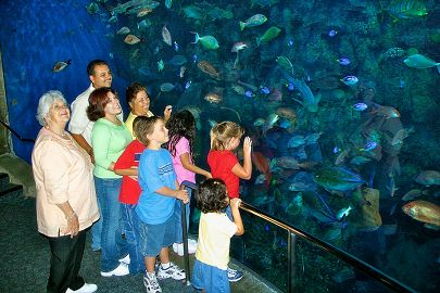 Aquarium Overview Tours