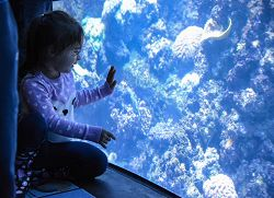 Child looking into exhibit